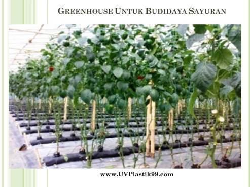 greenhouse-untuk-budidaya-sayuran-1
