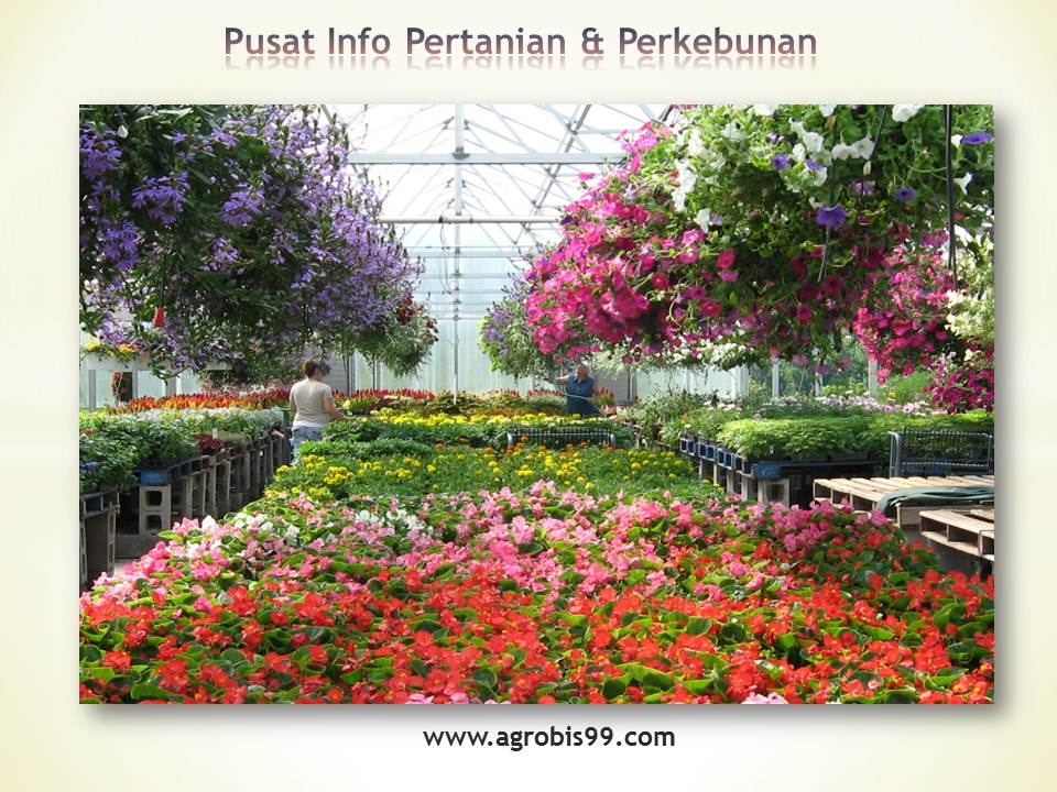 Blog Pertanian